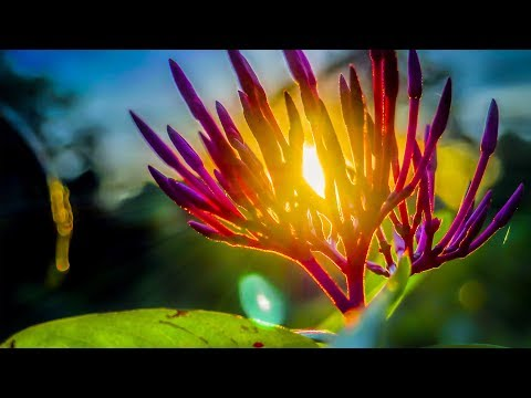Morning Relaxing Music Beautiful Nature And positive Energy Disley