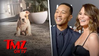 Chrissy Teigen Got The Cutest New Puppy | TMZ TV