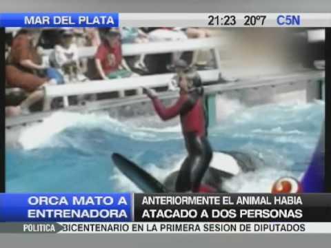 ORCA MATO A ENTRENADORA 25 02 10