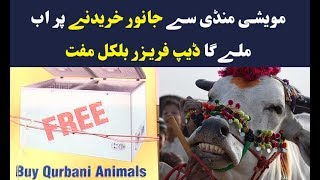 Buy animal and get free deep freezer in Karachi cattle market