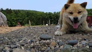 犬VS蛇 アオダイショウ 対 タロウ ヘビの目線 ローアングル撮影