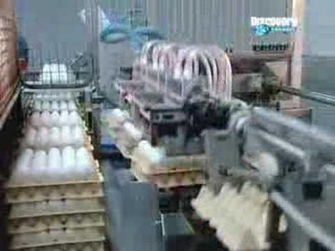 Yumurtanın Hikayesi