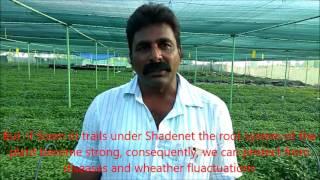 Success Story of Polyhouse/Shadenet Farmer Department of Horticulture, Andhra Pradesh