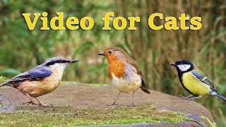 Videos for Cats : Birds in April Extravaganza