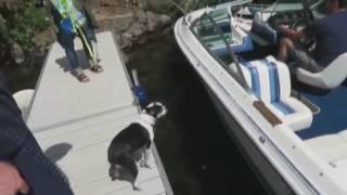 doggo jumps