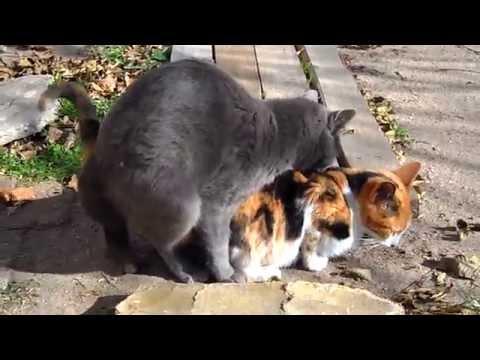 Xxx Mp4 Gatos Apareándose 3gp Sex