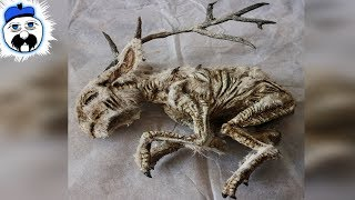 15 Scariest Things Ever Found In A Basement