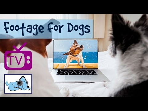 Dog TV  -  TV for Dogs, Nature Footage for Dogs - A Film for Dogs - Relaxation Footage for Dogs