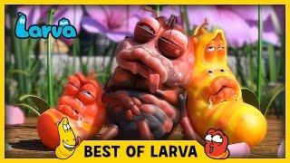 LARVA | BEST OF LARVA | Funny Cartoons for Kids | Cartoons For Children | LARVA 2017 WEEK 17
