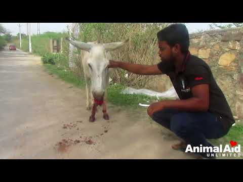 Xxx Mp4 Saddest Donkey S Mouth Full Of Blood After Eating Glass Saved 3gp Sex