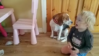 Guilty dog got hugs from little girl after he broke her bowl | Charlie the beagle