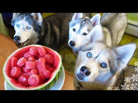 Xxx Mp4 WATERMELON DOG TREAT How To Make Frozen DIY Dog Treats Snacks With The Snow Dogs 34 3gp Sex