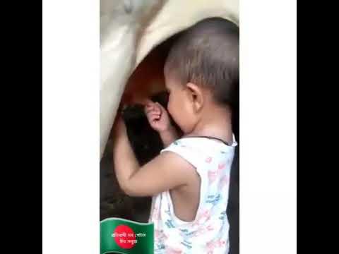 Xxx Mp4 বাচ্চাটি মায়ের দুধ খেতে না পেয়ে গরুর দুধ খায় Mother Does Not Have The Milk To Eat The Cow S Milk 3gp Sex