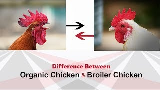 What is the difference between Organic and non Organic Chicken || Which is Better?