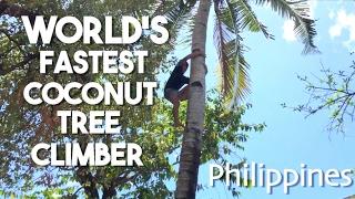 World's Fastest Coconut Tree Climber (Philippines)