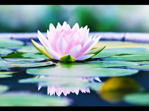 Meditation Relax Music, Soothing Music, Relaxing Music Meditation, Yoga, Binaural Beats, ☯2694