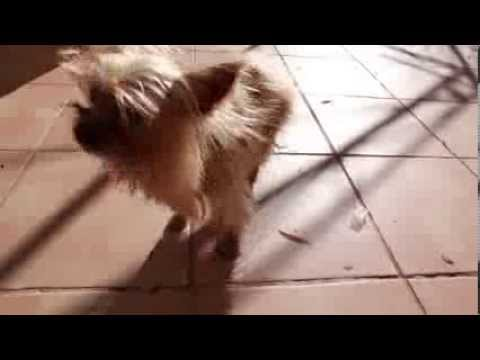 Xxx Mp4 16 YEARS OLD DOG SEXY 3gp Sex