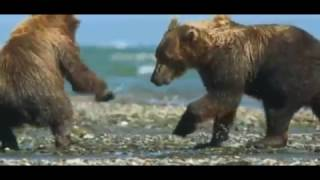 Alaska Selvaggia