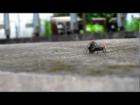 funny animal porn sex the fly