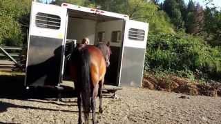 Gigolos trailer training 2 weeks later