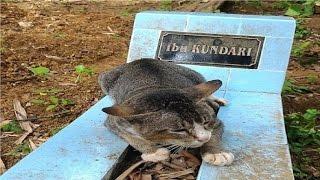 قطة وفية تعيش فوق قبر صاحبتها لعام كامل