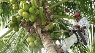 Cómo cultivar Coco de manera tecnificada - TvAgro por Juan Gonzalo Angel