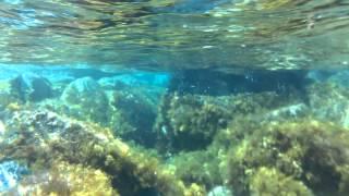 Nokia Lumia 1020 Underwater