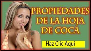Propiedades de la hoja de COCA - Las Bondades Curativas de la Hoja de Coca