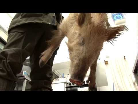Hunting British wild boar with N550 night vision and a Blaser R8