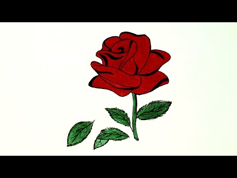 Xxx Mp4 How To Draw Red Rose लाल गुलाब कैसे बनाये How To Make Red Rose 3gp Sex