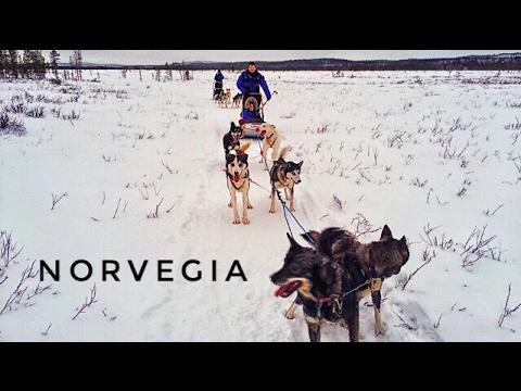 Norvegia il più bel video sui cani da slitta