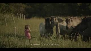 The girl and wild horses