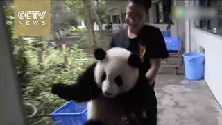 Cuteness overload: Conversation between panda and his keeper