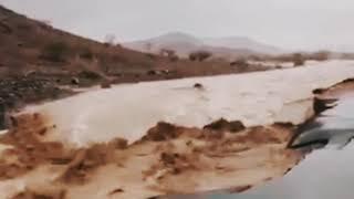 Dilúvio na Arábia saudita, pessoas e animais mortos