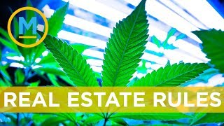 Can you grow or smoke cannabis if you're a renter? | Your Morning