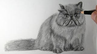 Comment dessiner un chat Persan - Speed Drawing