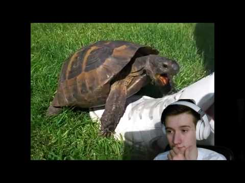 Xxx Mp4 REACTING TO RANDOM WTF INTERNET VIDEO S Turtle S Have Sex 3gp Sex