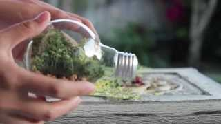 DIY Lightbulb Terrarium