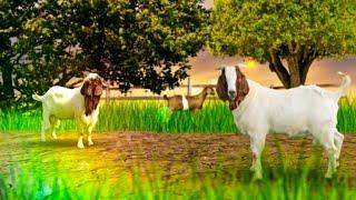 || Bakra Mandi || Cow Mandi | 2016 || Maweshi Mandi || Karachi || Sohrab Goth Gai Mandi || EP 4 ||