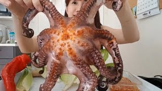 BẠCH TUỘC KHỔNG LỒ Giant Octopus