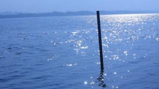 Download Free River water  Stock Footage