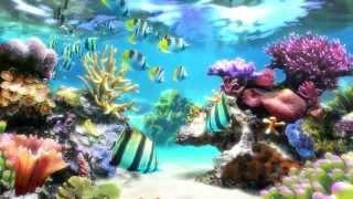 Sim Aquarium - Screensaver & Live Wallpaper