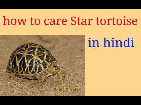 tortoise in hindi