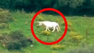 5 Unicorns Caught on Camera & Spotted In Real Life!