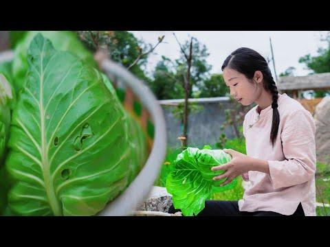 � 吃的包菜做法,一背簍20多斤包菜,才做出這點� 東西 值了 How to preserve cabbage Chinese delicacy made with cabbage 野小妹 美食