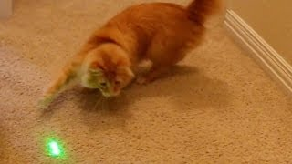 Cat Slow Motion - Lucky feat. Laser Pointer