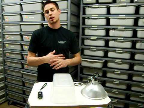 JKR Pro Tip Ball Python Caging