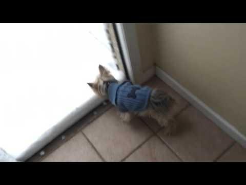 Dog Meets Snow
