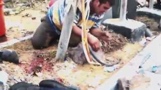 Exército massacra a população Egípcia (Cenas Fortes)