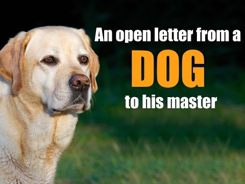 Xxx Mp4 Very Emotional Heart Touching Video Ever An Open Letter From A Dog To His Master Inspirational 3gp Sex